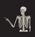 human skeleton finger pointing isolated over black vector image vector image