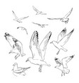 set flying seagulls hand drawn in vector image vector image