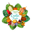 exotic and tropical fruits food and drink vector image vector image