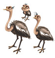 maturation stages of ostrich stages of growth vector image vector image