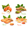 ripe nuts collection vector image vector image