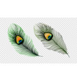 stock set realistic peacock vector image