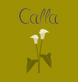 flat on background flower calla vector image vector image