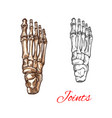 sketch icon of human foot bones or joints vector image vector image
