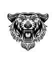 tiger head front view vector image