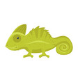 animal pet - green chameleon vector image vector image