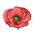 farm poppy icon cartoon style vector image