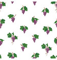grape seamless pattern wine yard natural fruit vector image