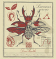 retro banner with drawing of a stag-beetle vector image