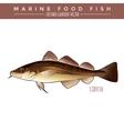 Codfish Marine Food Fish vector image