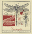 retro banner with dragonfly and it larva vector image