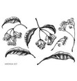 set hand drawn black and white ardisia vector image vector image