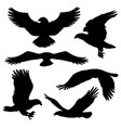 eagle or hawk silhouettes with broad wings vector image