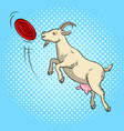 goat catches frisbee disc pop art vector image vector image
