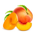 ripe peaches whole and slices vector image vector image