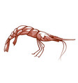 shrimp icon appetizer and dinner sea ingredient vector image vector image