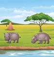 cartoon two hippos in savannah vector image vector image