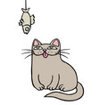 cute grey cat sits and looks at the hanging dried vector image vector image