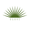 design template of the agave plant vector image vector image