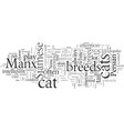 domestic cat breeds vector image vector image