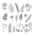 hand drawn collection herbs and flowers vector image