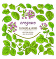 oregano elements set vector image vector image