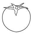 Sketch line drawing of tomato vector image