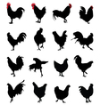 roosters and hens vector image