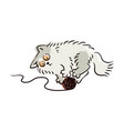 cute light grey cat playing with yarn ball vector image