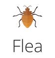 Skin vermin flea vector image