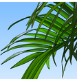 background of sky with palm leaves vector image vector image