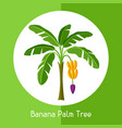 banana palm tree of exotic tropical vector image vector image