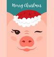 merry christmas card funny christmas pig cartoon vector image