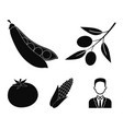olives on a branch sweet peas corn cob red vector image vector image