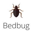 Bedbug parasite vector image