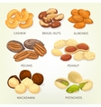 Brazil nuts and cashew fruit seeds grains vector image vector image