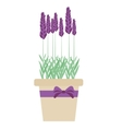 Isolated lavender flowers in pot vector image vector image