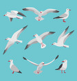 set of atlantic seagulls in cartoon vector image