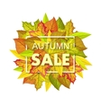 Autumn Sale Banner Fall Background Foliage vector image vector image