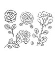 hand drawn sketch of rose flower vector image vector image