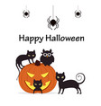 pumpkin with cats owl and spiders vector image