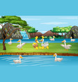 scene with ducks pond vector image vector image