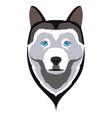siberian husky avatar vector image