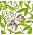 allspice branch pattern vector image vector image