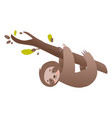 cute sloth hanging on branch of tree and smiling vector image vector image