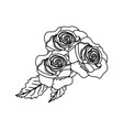 outline beauty exotic roses and nice leaves vector image vector image