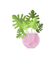 philodendron house plant indoor flower in pot vector image vector image