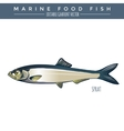 Sprat Marine Food Fish vector image vector image