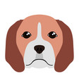 Isolated beagle avatar