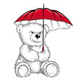 drawing teddy bear with umbrella vector image vector image